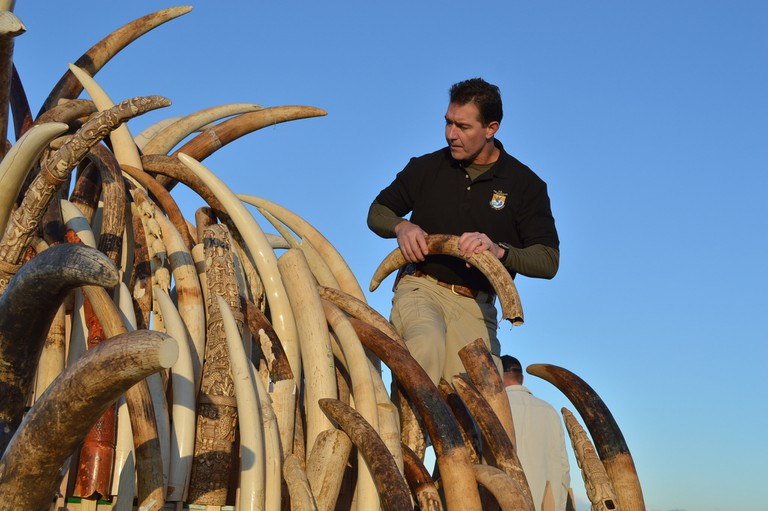 USFWS assembling ivory tusks on a tower for display before crushing @ Ivy Allen/USFWS