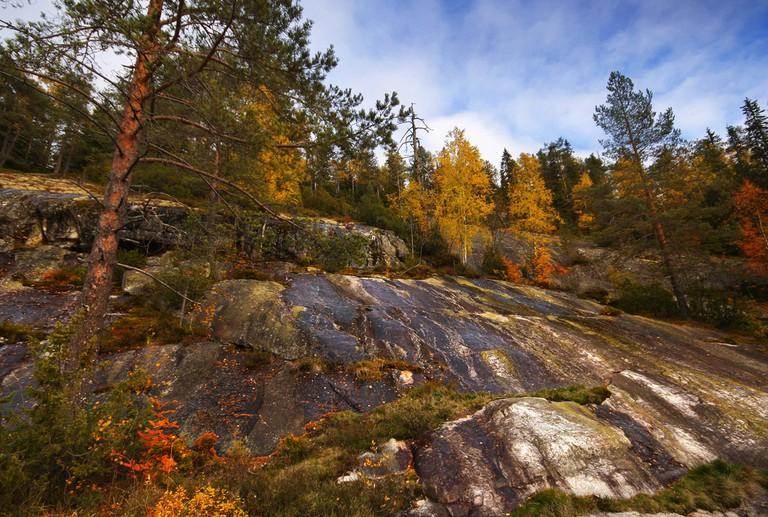 The terrain of Koli National Park/ Miguel Virkkunen Carvalho/ Flickr