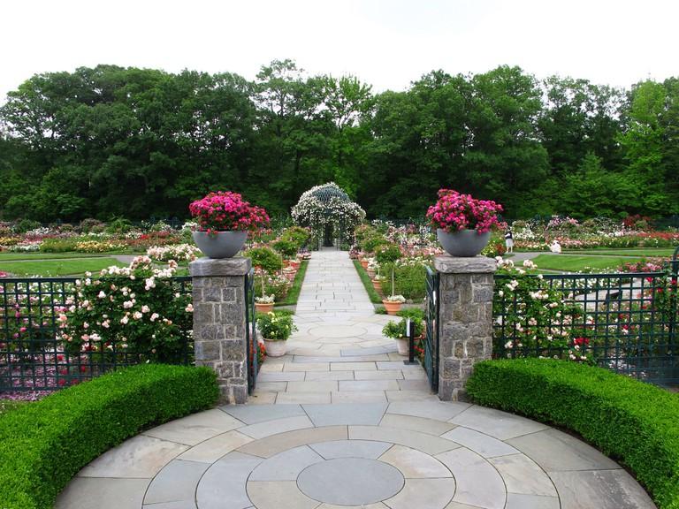 Peggy Rockefeller Rose Garden, New York Botanical Garden © Kristine Paulus/ Flickr