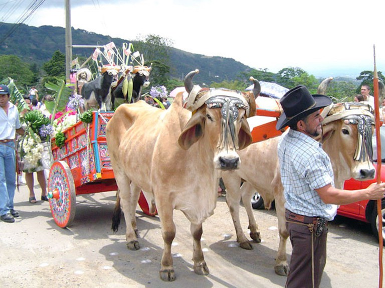 Traditional oxcart