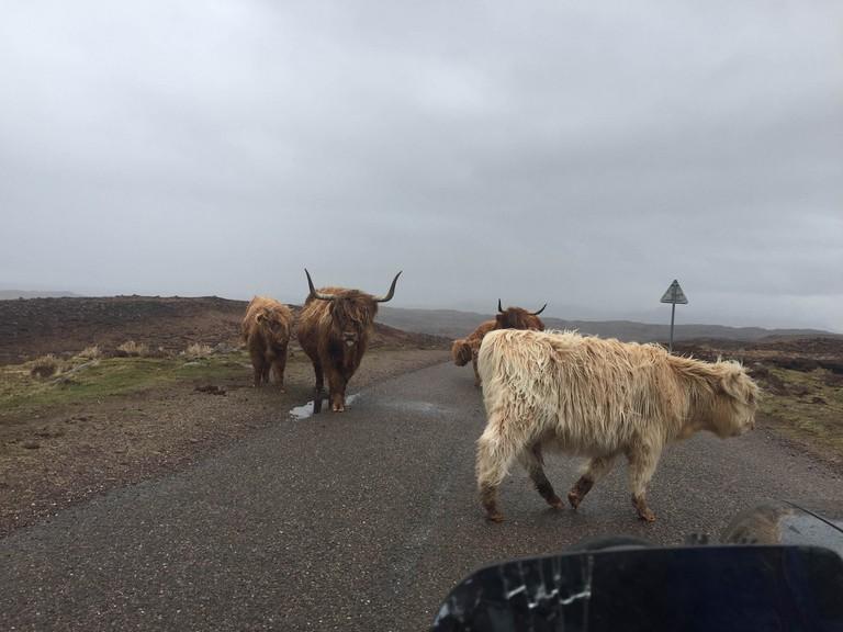 Gridlock! Highland Traffic Jam | © Kellas Campbell/Flickr