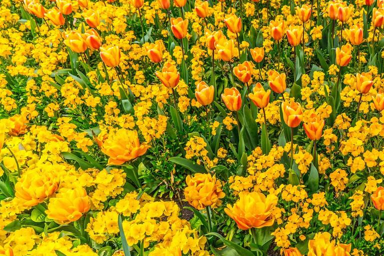 Flowers in Phoenix Park | © William Murphy/Flickr