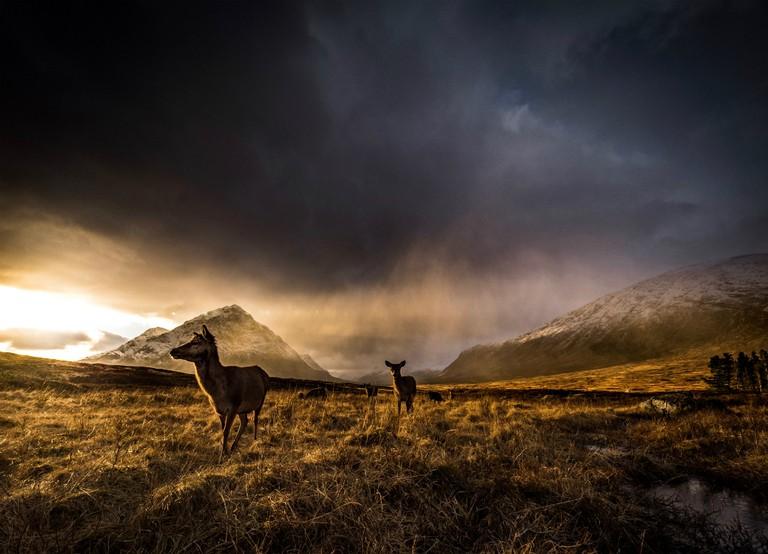 Highland deer © Richard Walker / Flickr