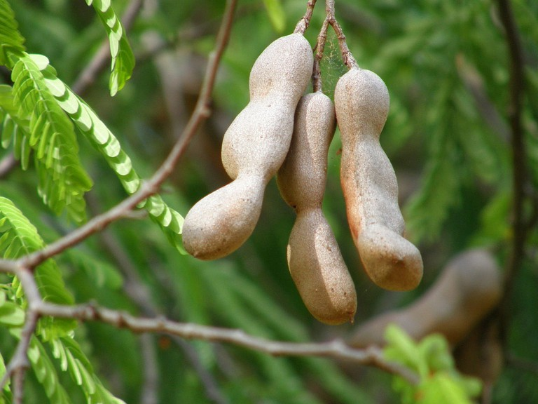 Tamarind | © Malcolm Manners/Flickr