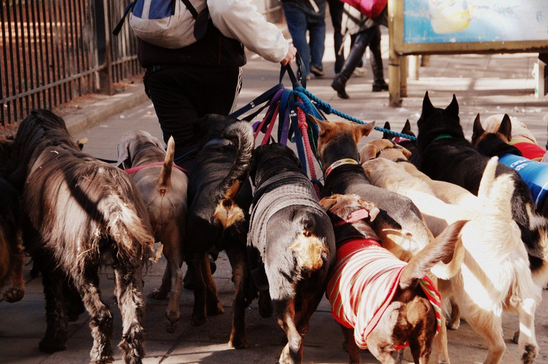 Dog walker in Buenos Aires | © LWYang/Flickr