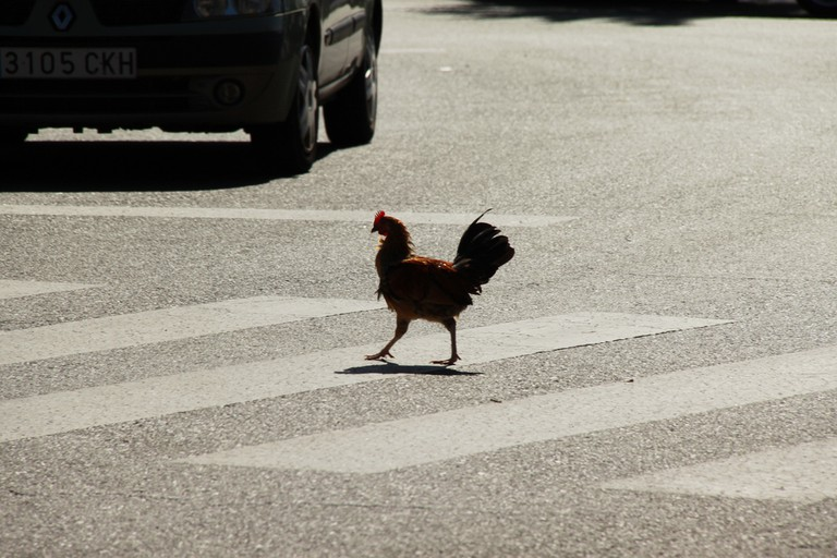 Why Did The Chicken Cross The Road? | © Cristian Bortes / Flickr