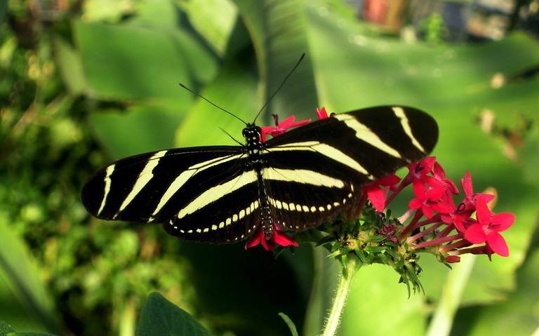 A butterfly at Hortus Botanicus