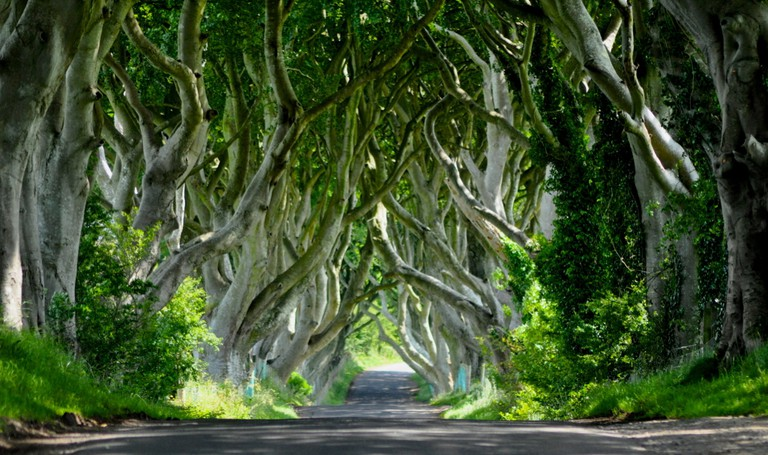 The Dark Hedges in Armoy | © horslips5/ Flickr
