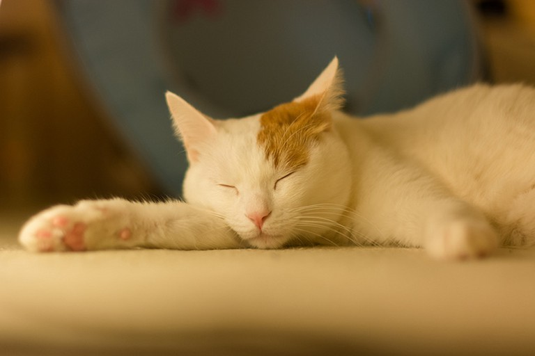 Cats in London Cat Cafe