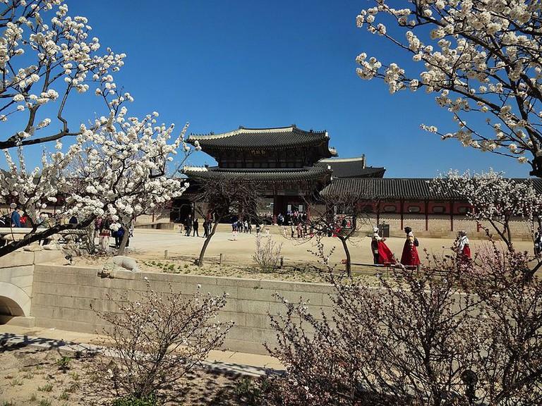 Cherry blossom at Gyeongbokgung_Palace | © Wikimedia© Wikimedia