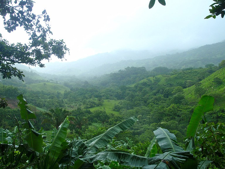 Peace and serenity in the cloud forest