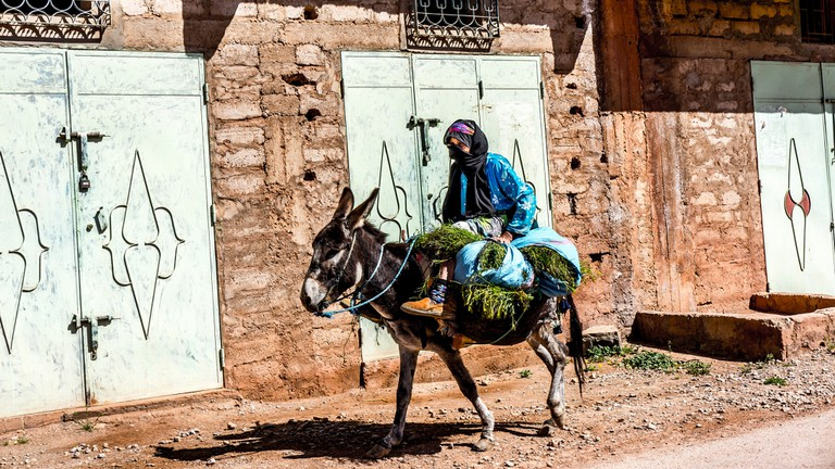 A Moroccan donkey carrying a lady and greenery