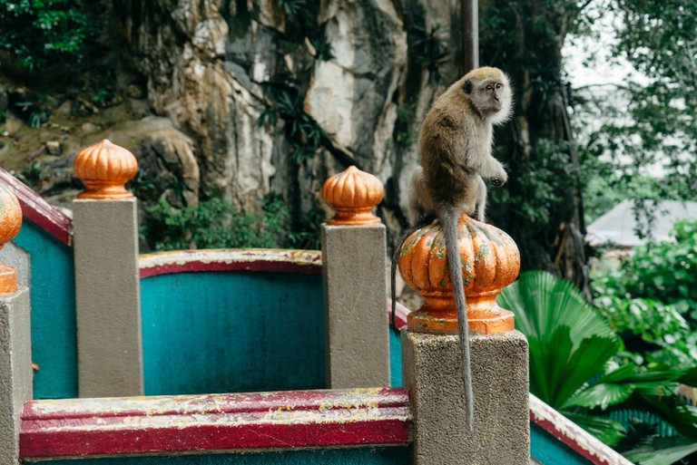 Local monkey at the Batu Caves, Malaysia | Irene Navarro / © Culture Trip