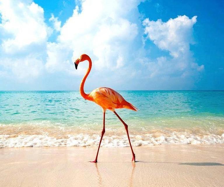 The Flamingo, the national bird of The Bahamas| © Konrad Herrman/flickr