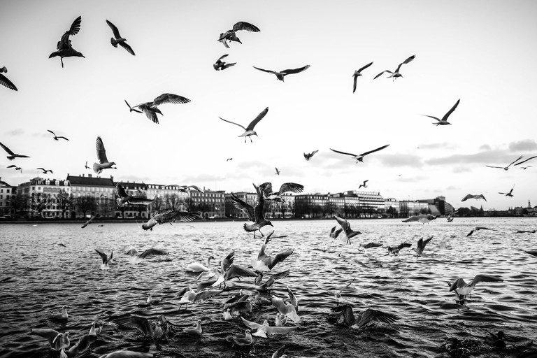 Copenhagen's Nature   © Christian Lykking