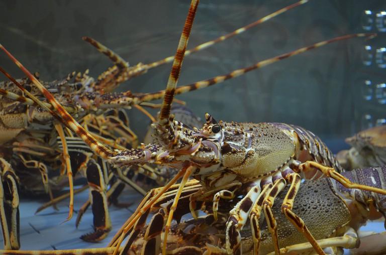 https://pixabay.com/en/lobster-food-fish-crustaceans-1802731/