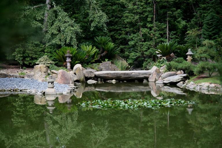 Lotusland|©brewbrooks/Flickr