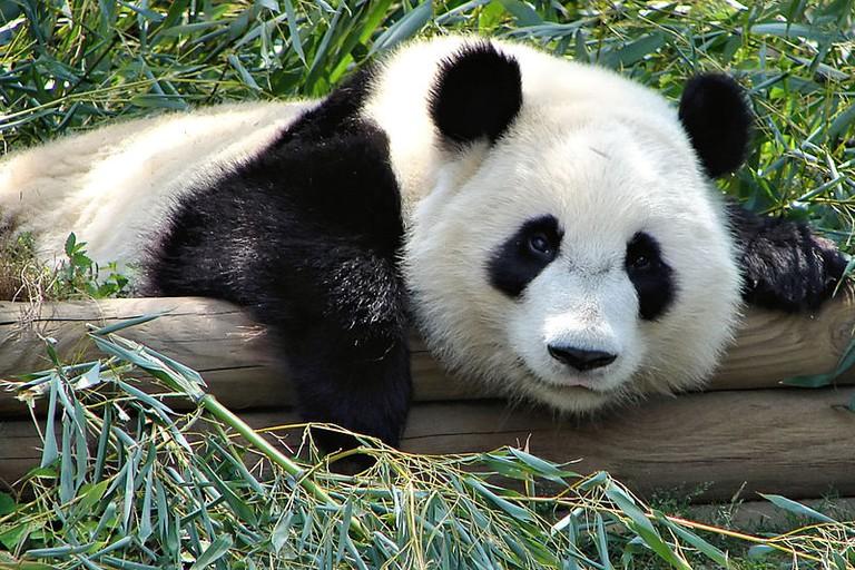 Mei Lan | Wikimedia Commons