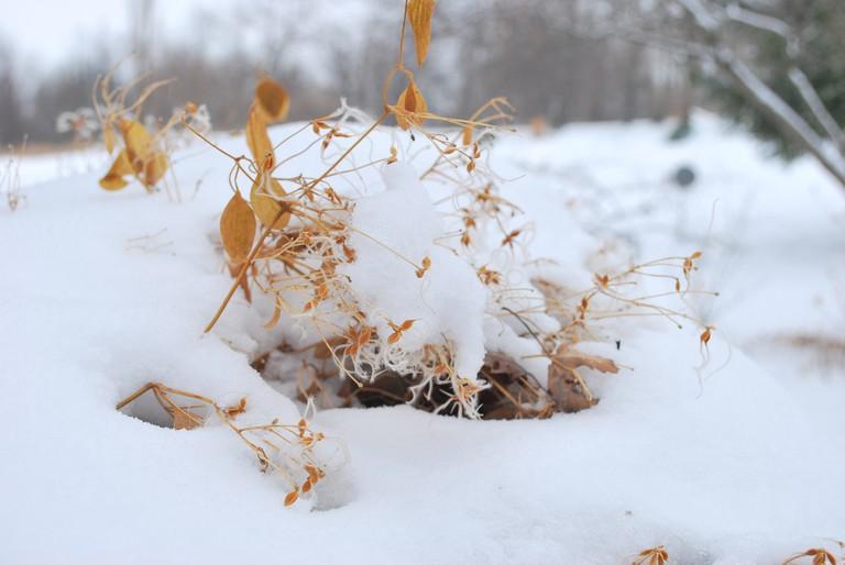 snow in Nashville / (c) Andy Gasparini / Flickr