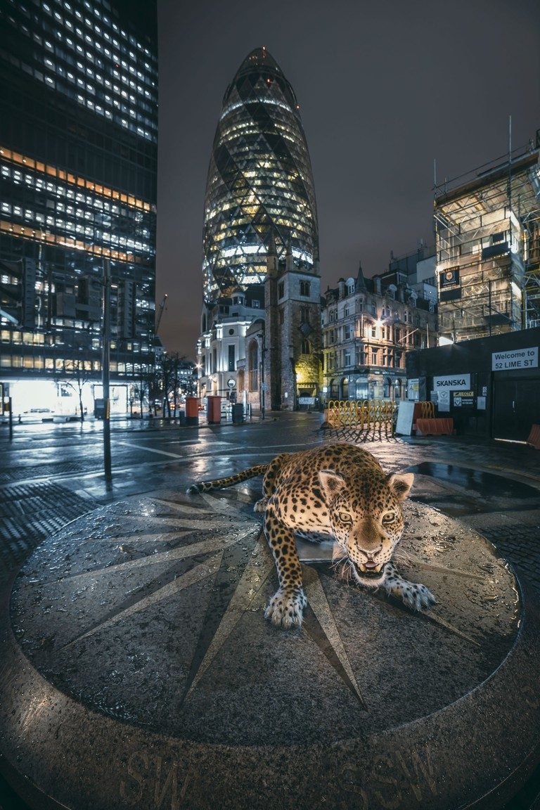 The Leopard in London. Images by Sam Hobson.