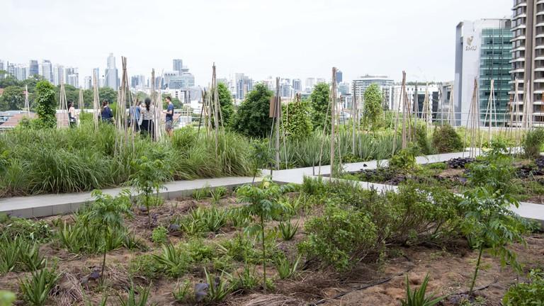 Raffles City Rooftop Garden | Courtesy of Edible Garden City