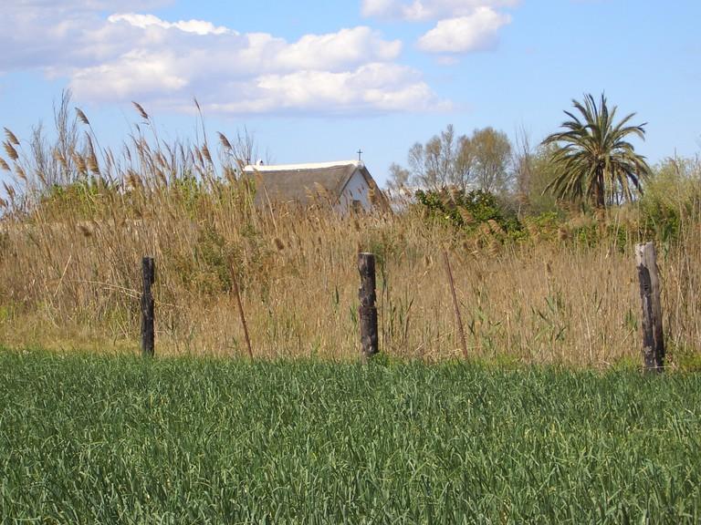 Rice fields in La Albufera. Photo courtesy of Valencia Tourism