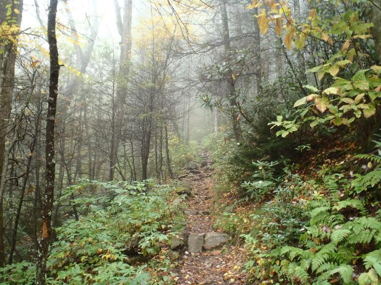 Great Smoky Mountains National Park / (c) Mark Spangler / Flickr