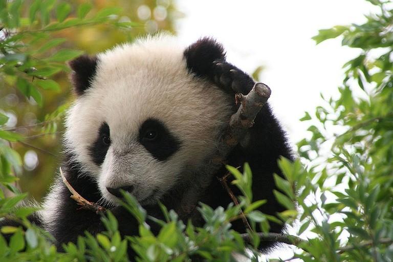 Su Lin | Wikimedia Commons