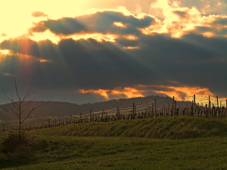 14 February in Bulgaria is dedicated to wine | © Pixabay