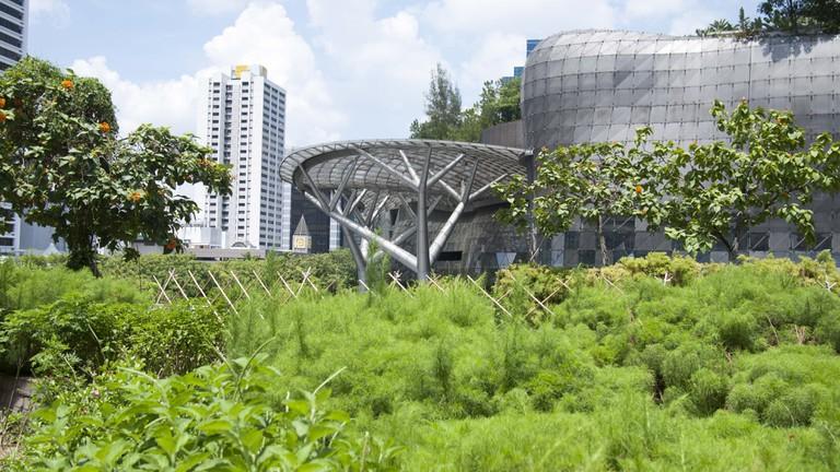 Wheelock Place Rooftop Garden | Courtesy of Edible Garden City