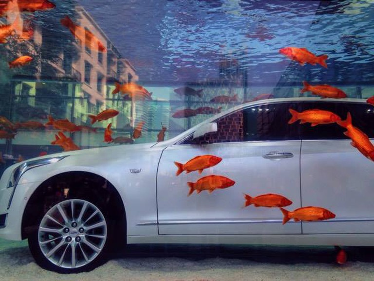 A Car Submerged in a Fish Tank in Xintiandi | ©Rachel Deason
