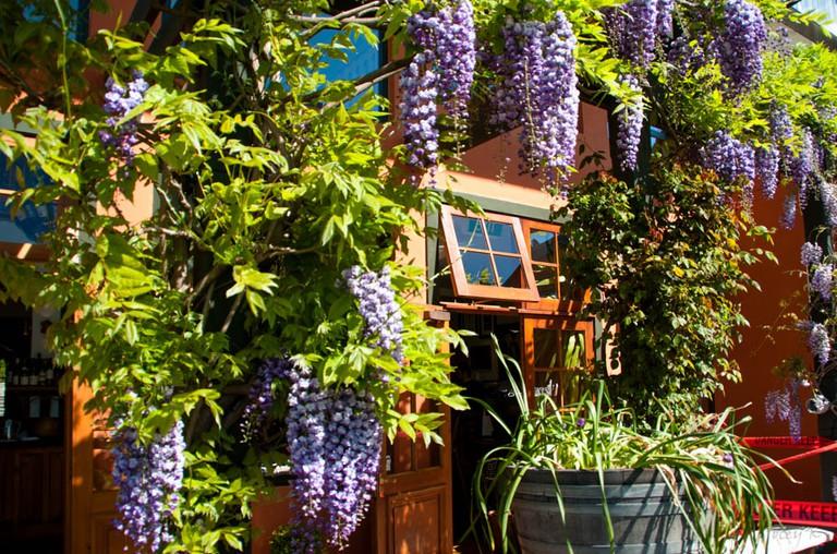 Pegasus Bay Winery, Waipara Valley | © Jocelyn Kinghorn/Flickr