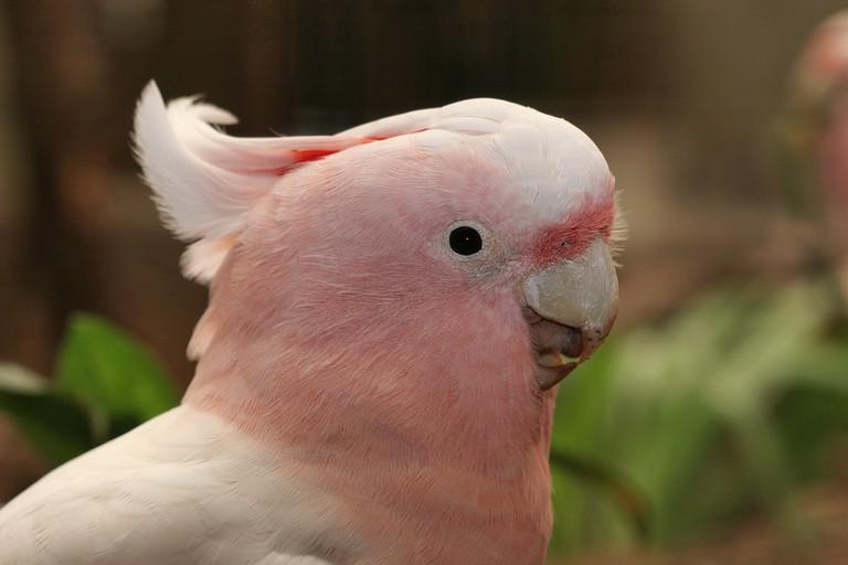 A parrot at Artis