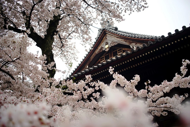 Sakura at Kan'eji Temple in Ueno | © Takashi .M/Flickr