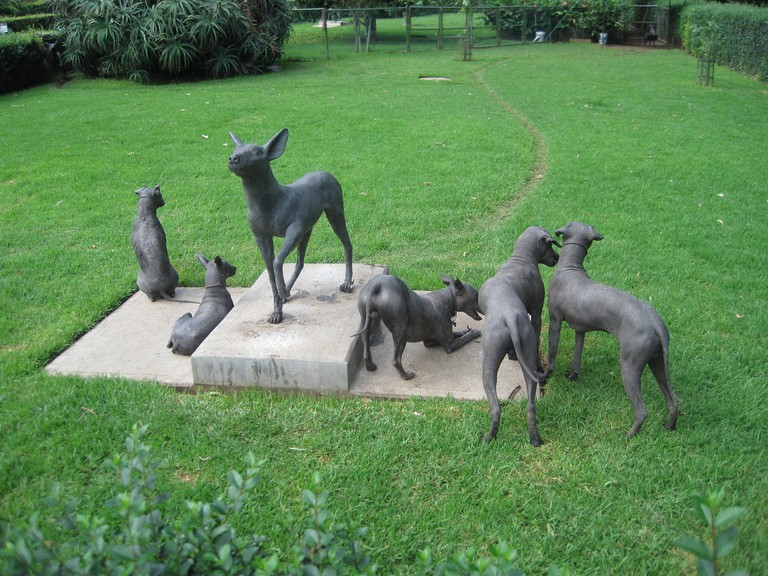 Hairless dogs at Museo Dolores Olmedo | © loppear/Flickr
