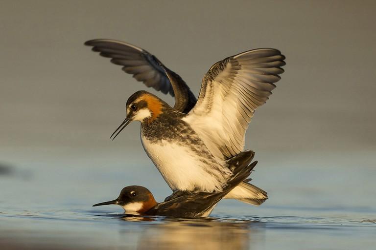 Mating | © Andy Howard