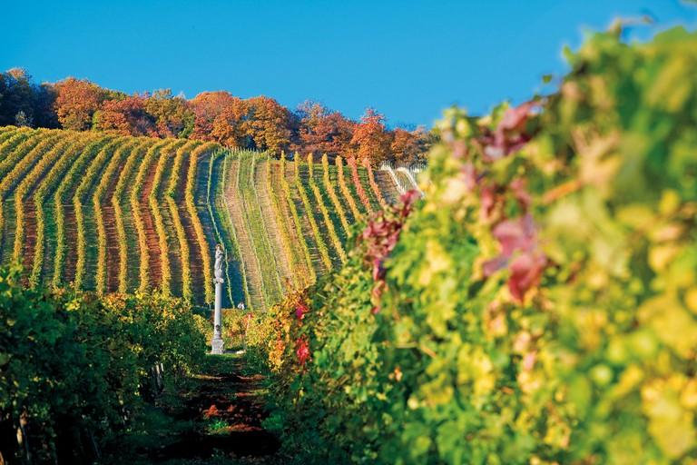 Viennese Wine: Vineyard in Vienna©WienTourismus/Lois Lammerhube
