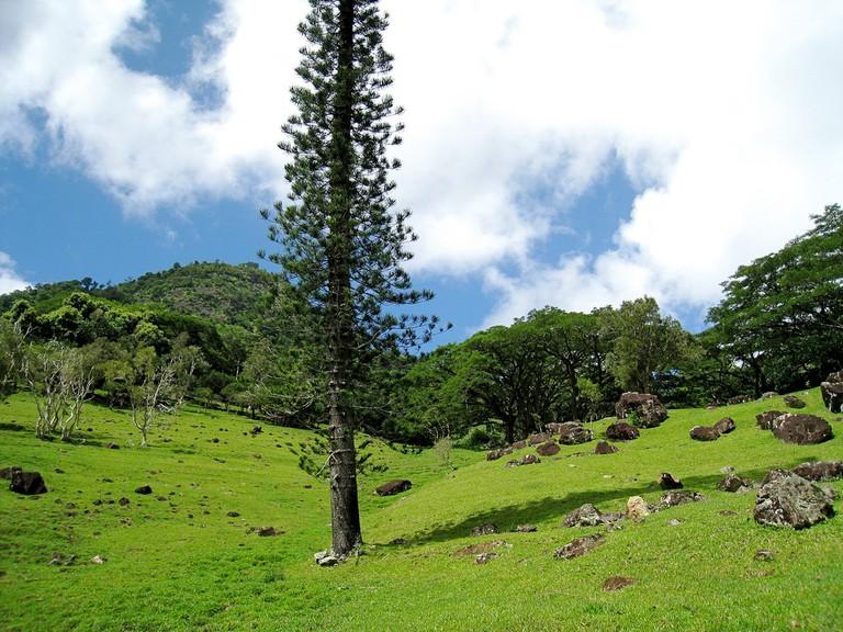 Dogny Plateau