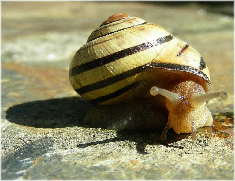"A ""caracol"" is a land snail."