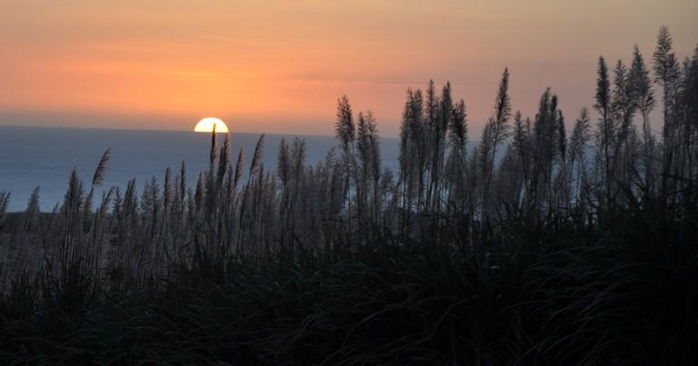 Sunset & sugar field 1