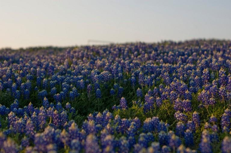 Bluebonnet Trail   © John McStravick/Flickr