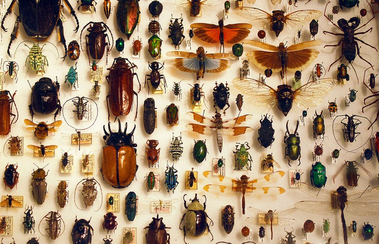 Insect collection | © Barta IV/Flickr
