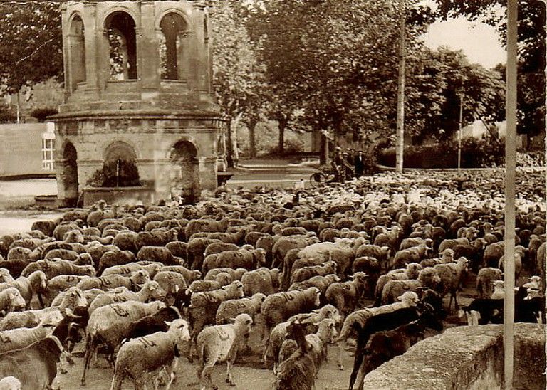 The transhumance in Bédarrides in the 1930s | © Unknown/WikiCommons