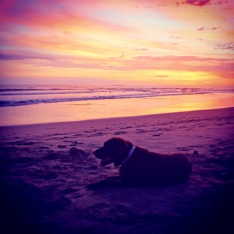 Even chocolate labs love sunsets here | © Jenn Parker