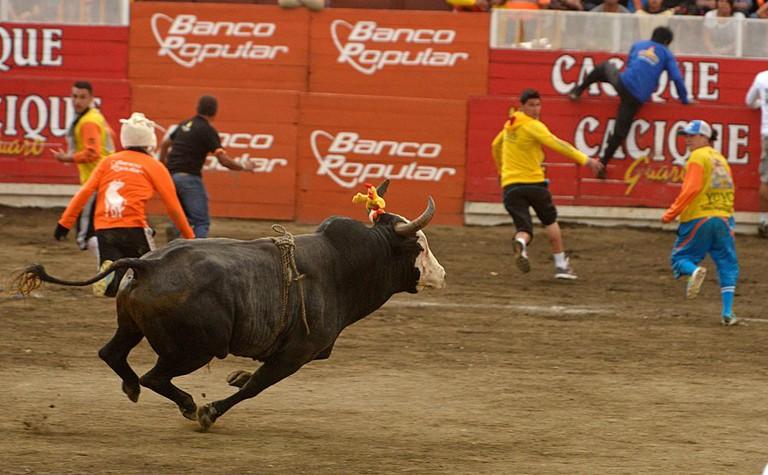 That's a fast bull