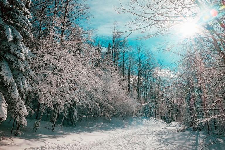 Canadian winter | © tpsdave / Pixabay
