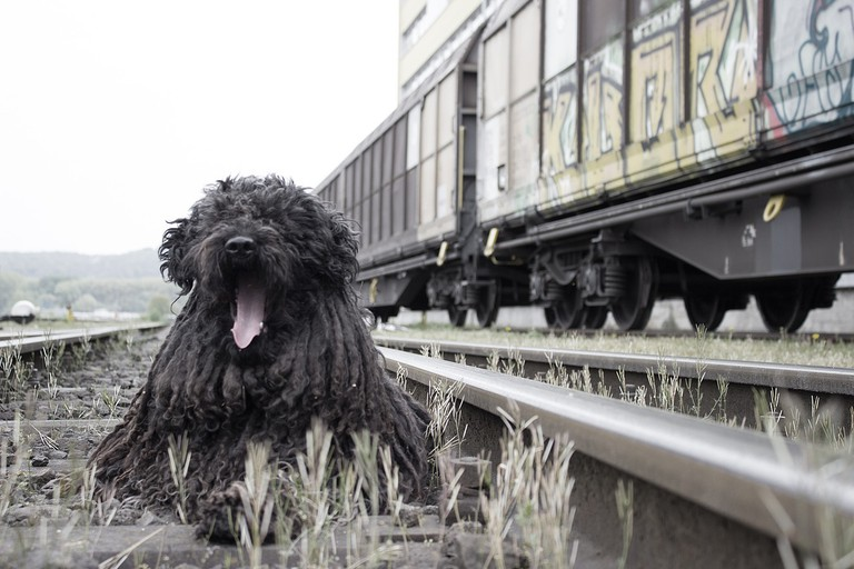 Berlin's most obedient dogs | © Einladung_zum_Essen/Pixabay