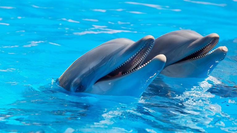 Dolphins|© Pexels/PixaBay