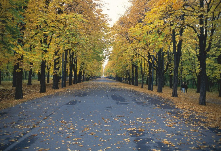 Main alley in Prater in autumn / Vienna