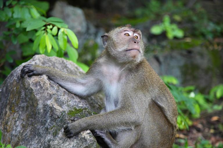monkey-1580542_1920